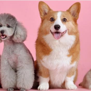 Pet friendly flooring article